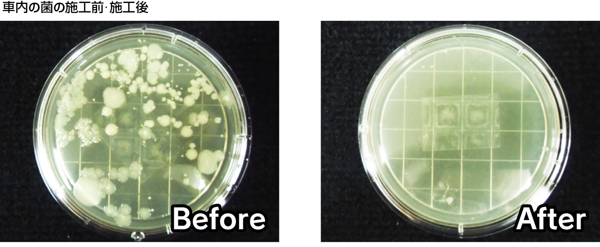 車内の菌を培養 施工前・施工後